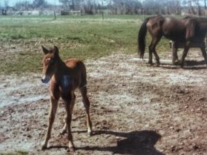 Pritchard Family Horse Farm