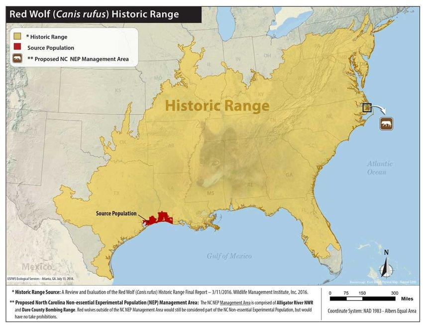 Red Wolf (Canis rufus) Historic Range